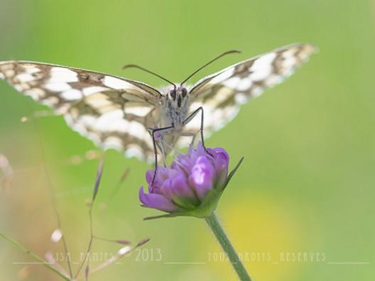 Macrophotographie Photographie Nature Artistique Papillon Demi deuil