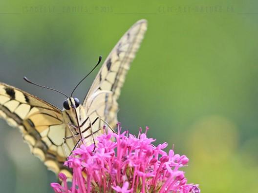 Macrophotographie Photographie Nature Artistique Papillon