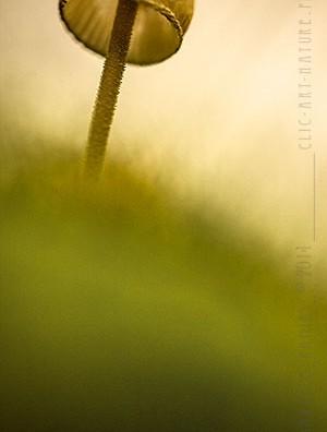 Macrophotographie Photographie Nature Artistique Champignon