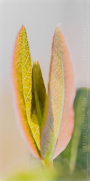 Macrophotographie Photographie Nature Artistique Chèvrefeuille