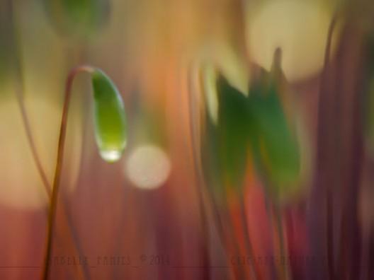 Macrophotographie Photographie Nature Artistique Mousse