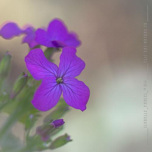 Macrophotographie Photographie Nature Artistique Fleur Lunaire
