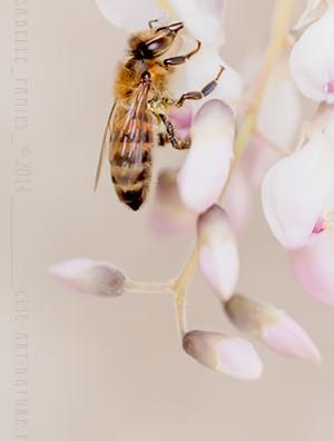 Macrophotographie Photographie Nature Artistique Abeille