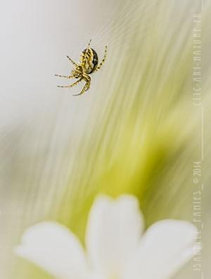 Macrophotographie Photographie Nature Artistique Araignée
