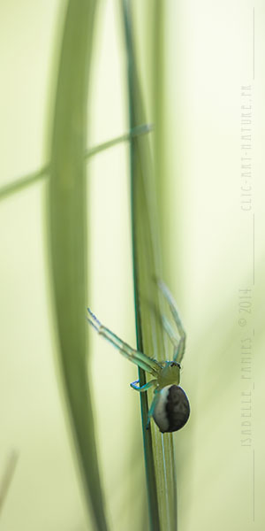 Macrophotographie Photographie Nature Artistique