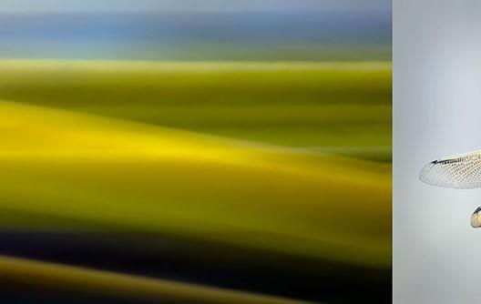 Macrophotographie Photographie Nature Artistique Macrophotographie Macrophotography