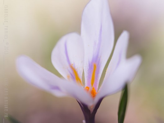 Macrophotographie Photographie Nature Artistique Macrophotographie Macrophotography Crocus