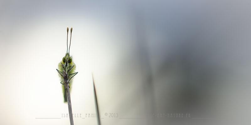 Macrophotographie Photographie Nature Artistique Macrophotographie Macrophotography Aurore