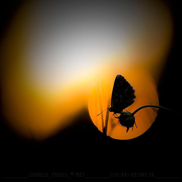 Macrophotographie Photographie Nature Artistique Macrophotographie Macrophotography Azuré