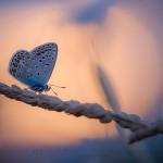 Papillons du soir, bonsoir…