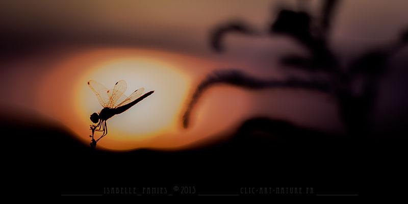 Clic-Art-Nature_2887c