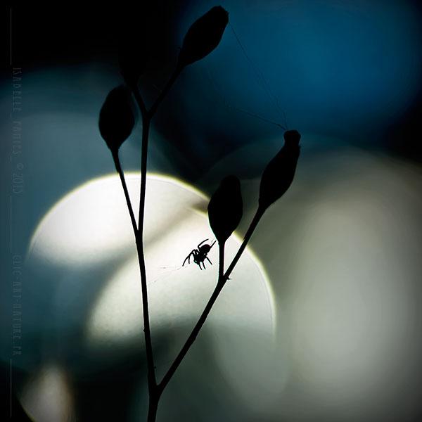 Clic-Art-Nature_3303