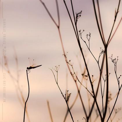 Clic-Art-Nature