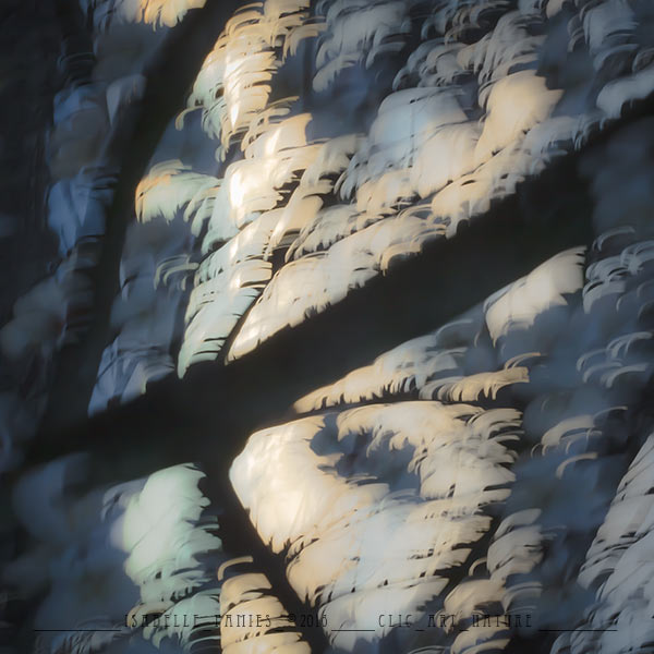 Clic-Art-Nature_8298