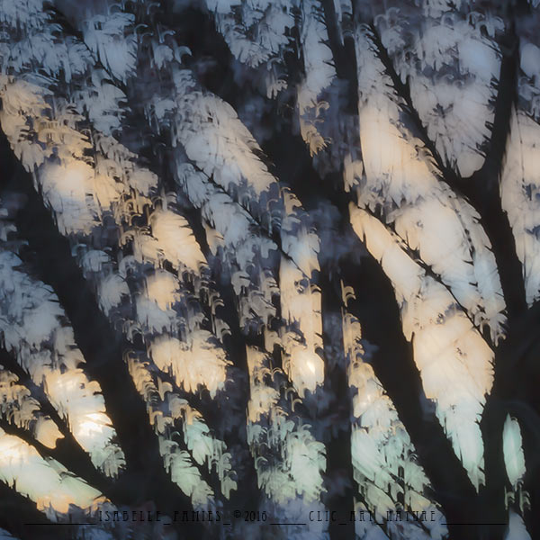 Clic-Art-Nature_8368