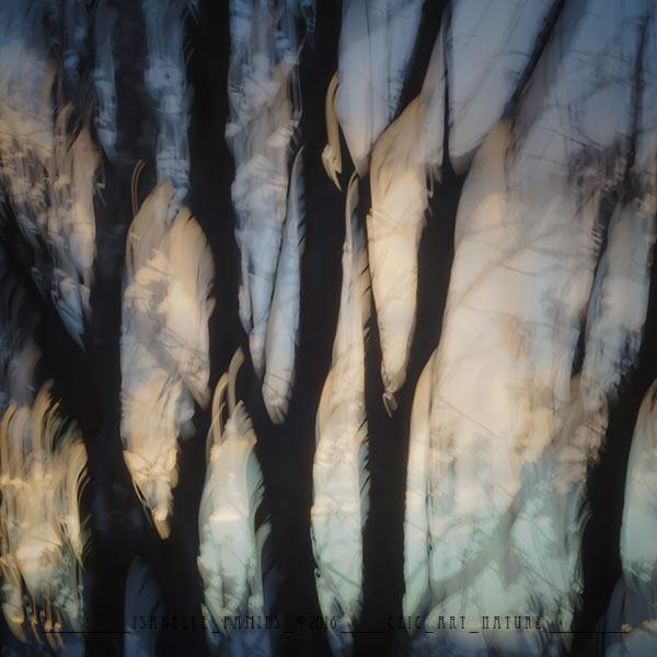 Clic-Art-Nature_8382