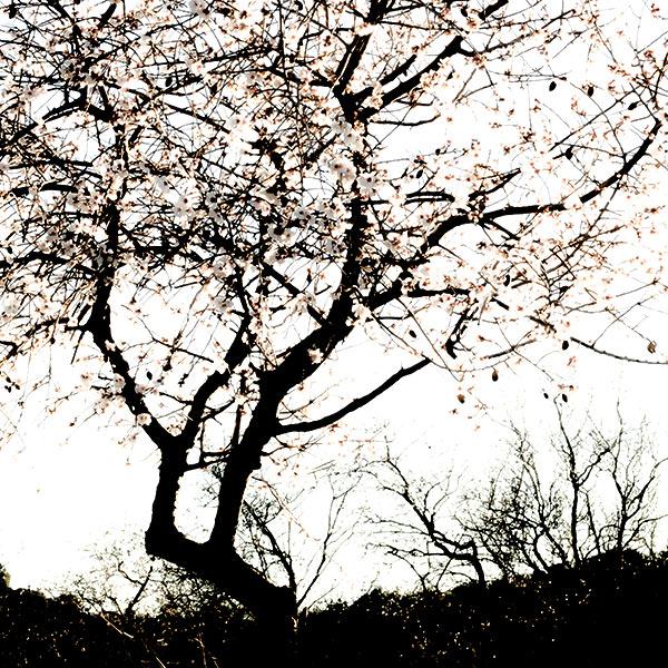 Clic-Art-Nature_8898b
