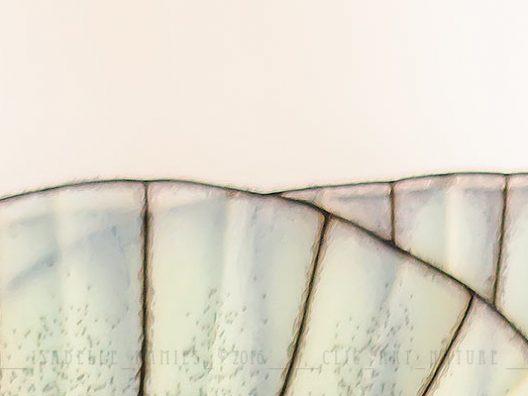 Gazé Macrophotographie Photographie Nature Artistique Macrophotographie Macrophotography