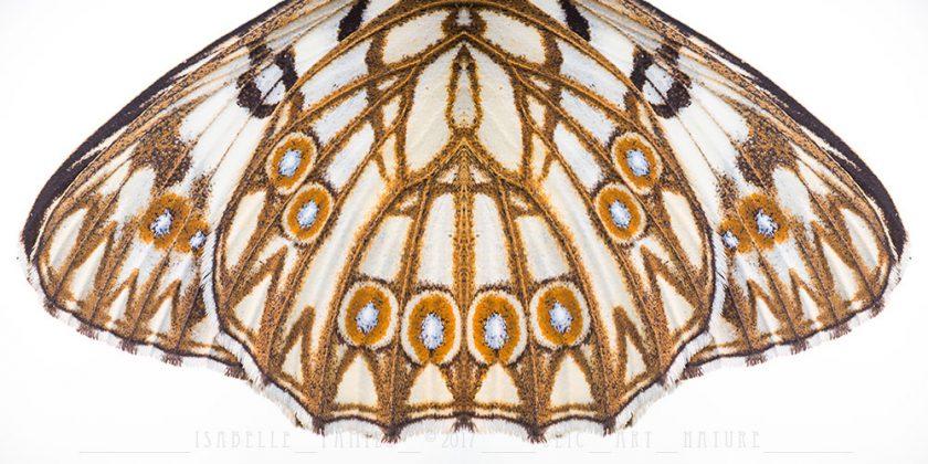 Echiquier d'Occitanie Macrophotographie Photographie Nature Artistique Macrophotographie Macrophotography